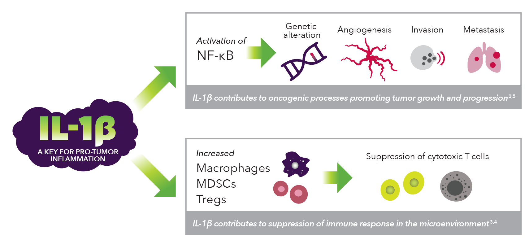 Visual image illustrating how IL-1β contributes to both oncogenic processes promoting tumor growth and progression and suppression of the immune response in the microenvironment.